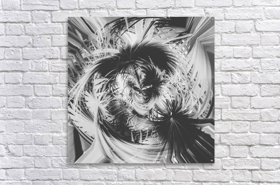 spiral palm leaves abstract background in black and white  Acrylic Print