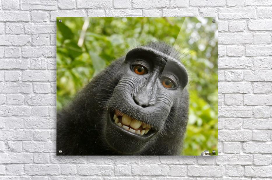 monyet  Impression acrylique
