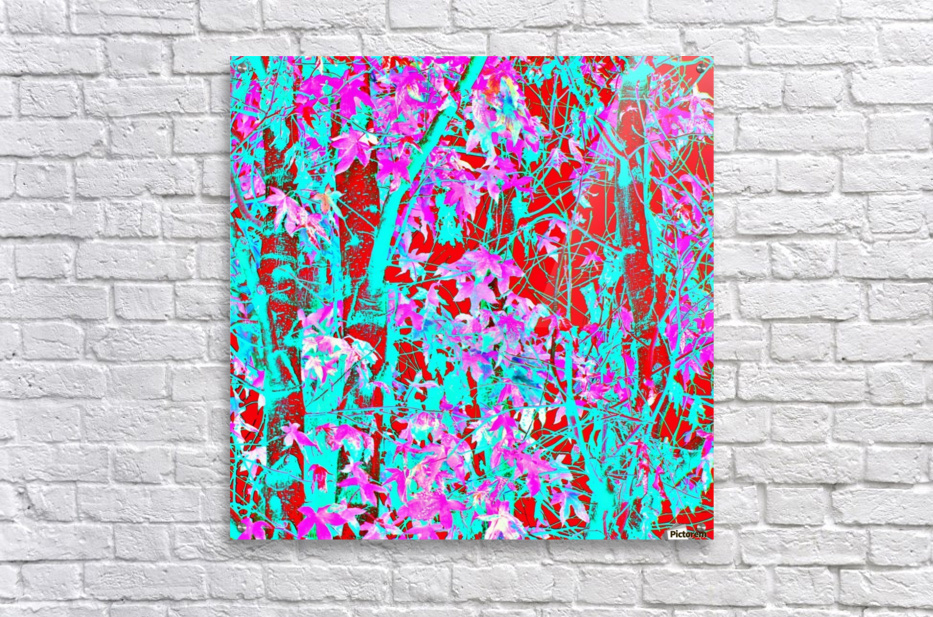 pink maple tree leaf with blue and red abstract background  Acrylic Print