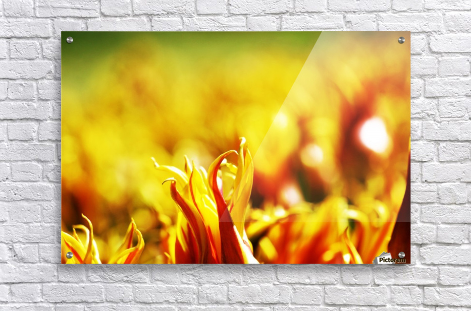 Flower Touch  Acrylic Print