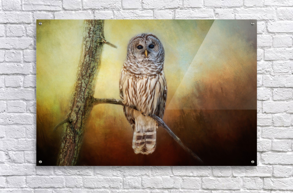 Barred Owl at sunrise with Textures  Acrylic Print