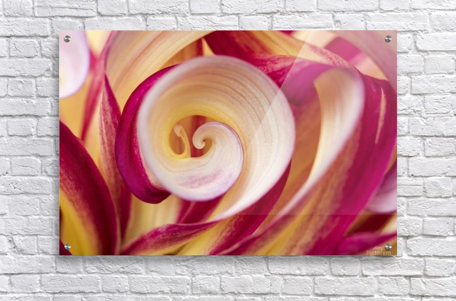 Spirales  Acrylic Print
