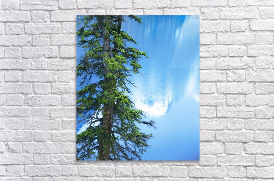 Natural order  Acrylic Print