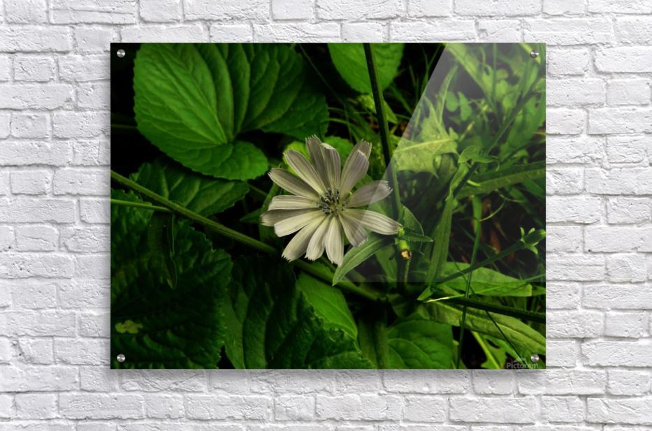 F (12)  Acrylic Print
