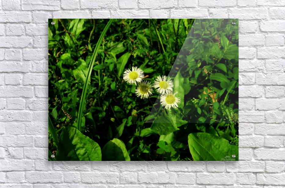 F (9)  Acrylic Print