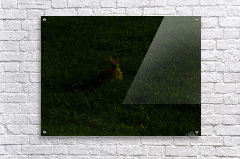 H (11)  Acrylic Print