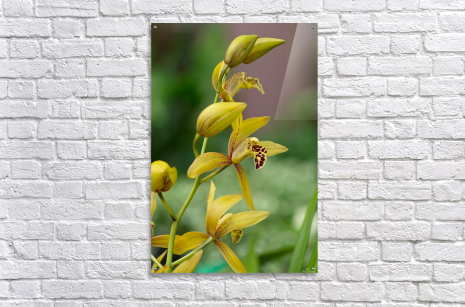 Yellow flowers stem  Acrylic Print
