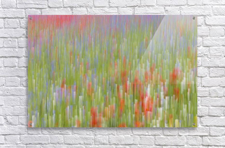La fioritura di Castelluccio  Acrylic Print