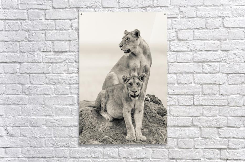 Mothers  Acrylic Print