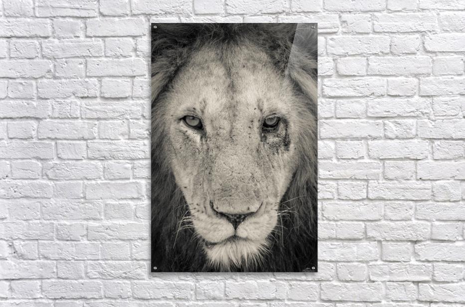 Tough Guy  Acrylic Print