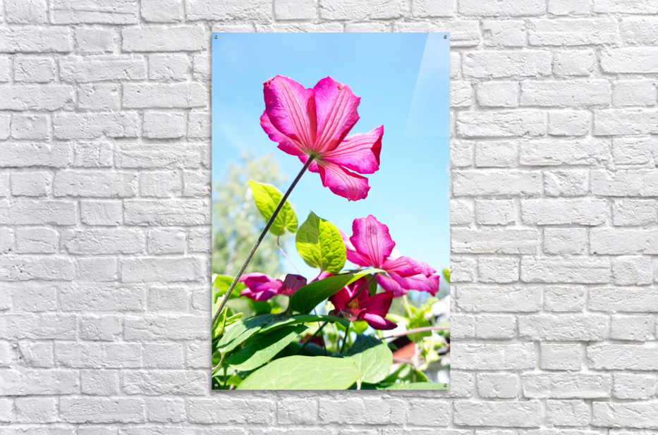 Pink flower and green leaves  Acrylic Print