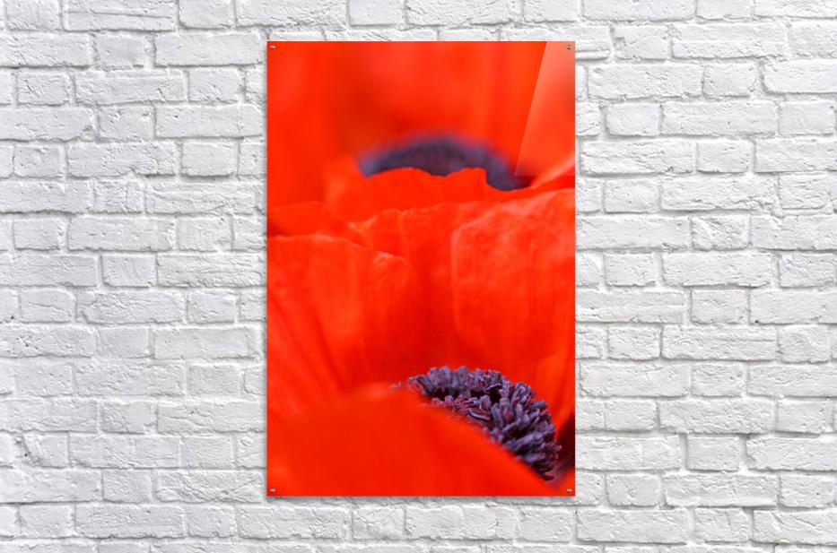 Poppy Heart I  Acrylic Print