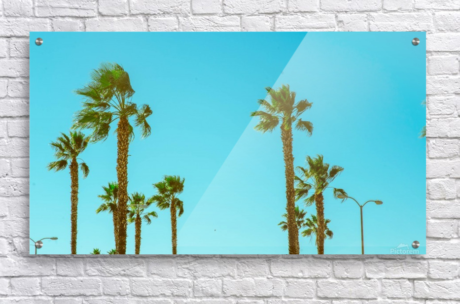 Hollywood Vibes  Acrylic Print
