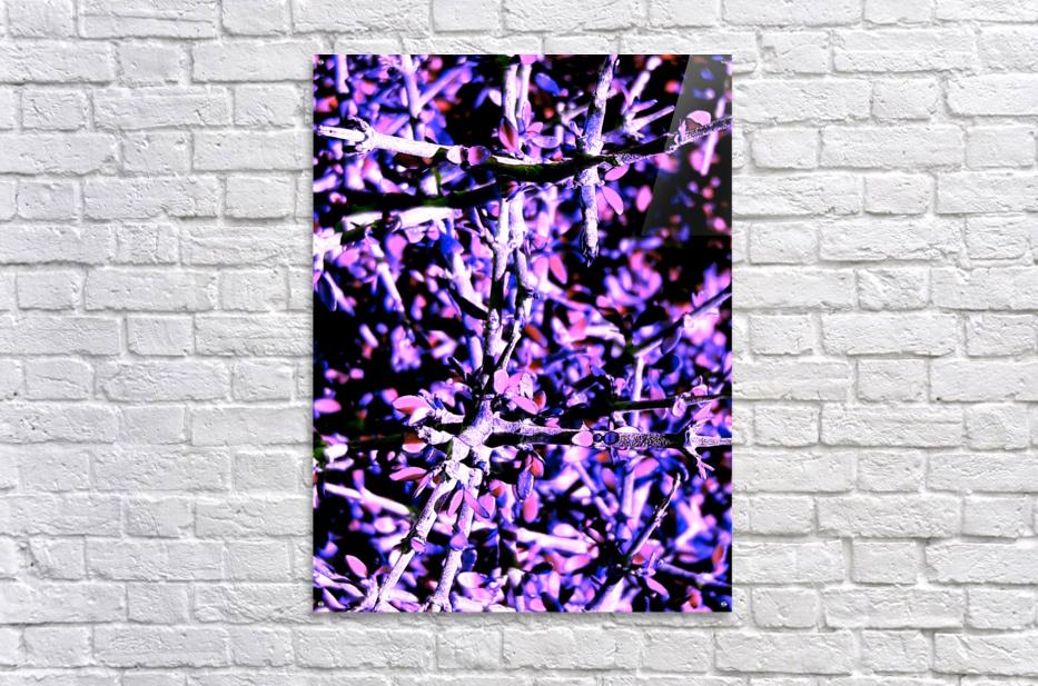 20181004_222321  Acrylic Print
