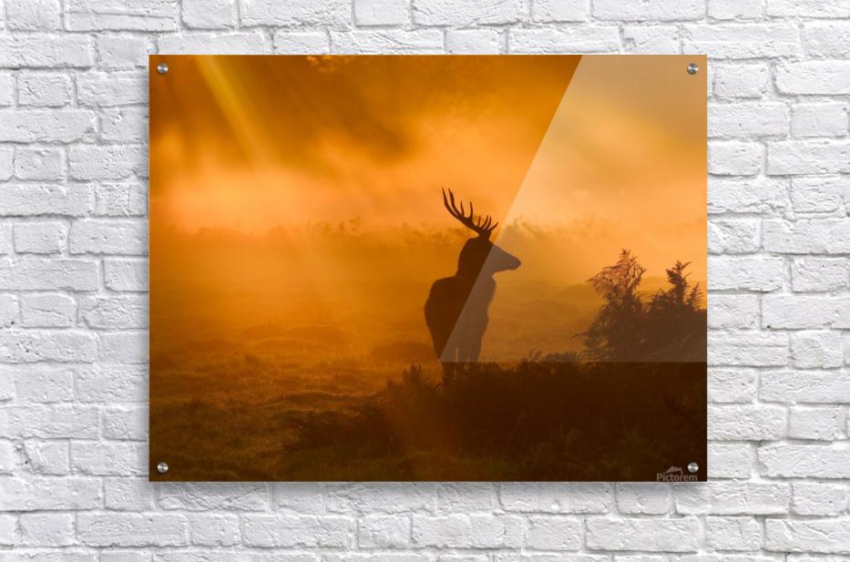 Guard Of Light  Acrylic Print
