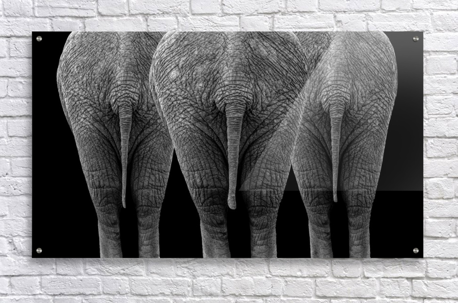 The Elephants  Acrylic Print