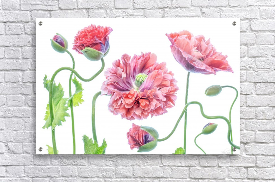 Fancy  Acrylic Print