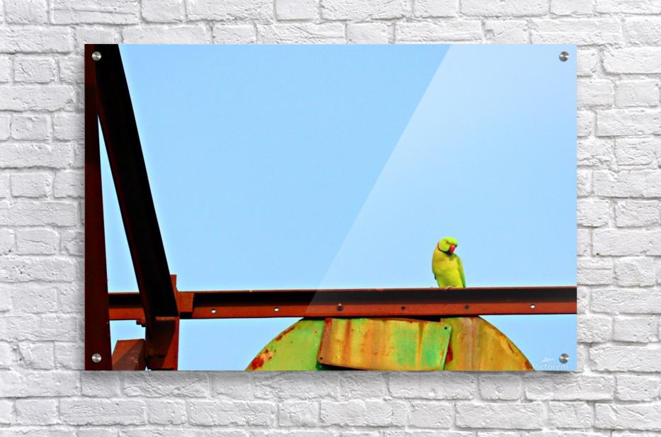 Balancing  Acrylic Print