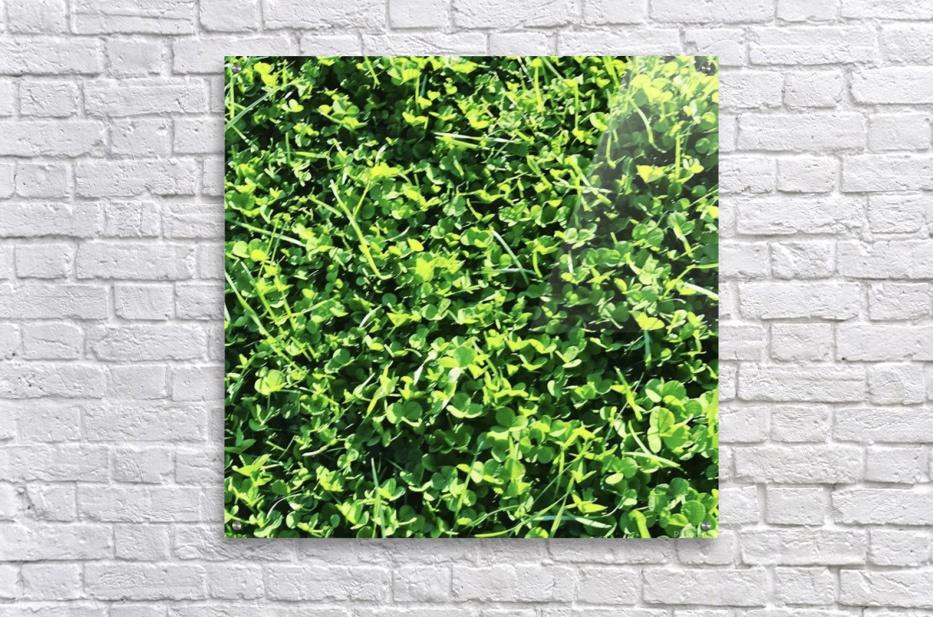 Grassy Wonderland  Acrylic Print