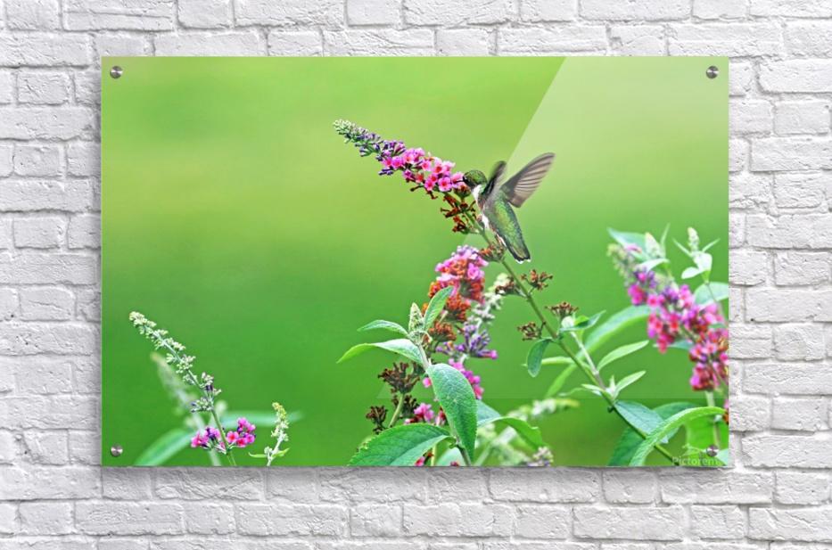Jewel In The Garden  Acrylic Print