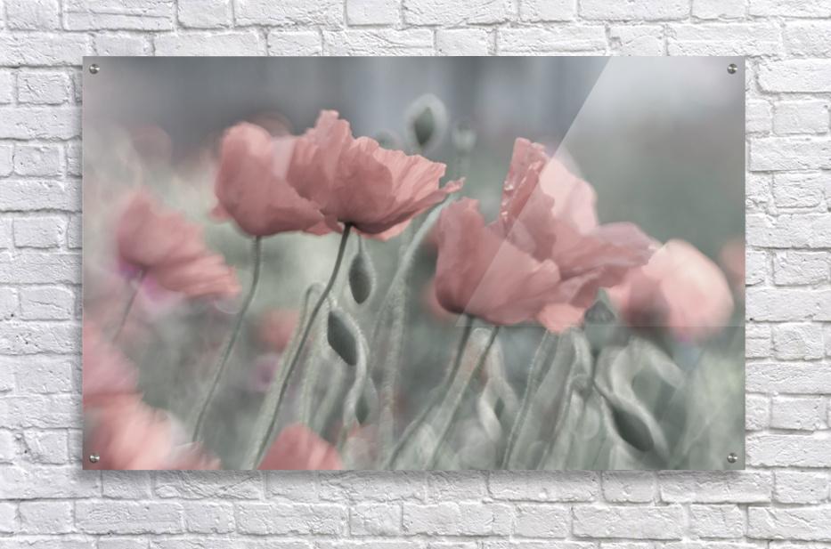 Softly  Acrylic Print