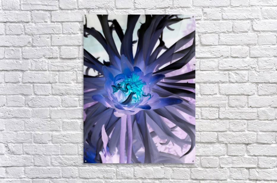 BLAZE  Impression acrylique