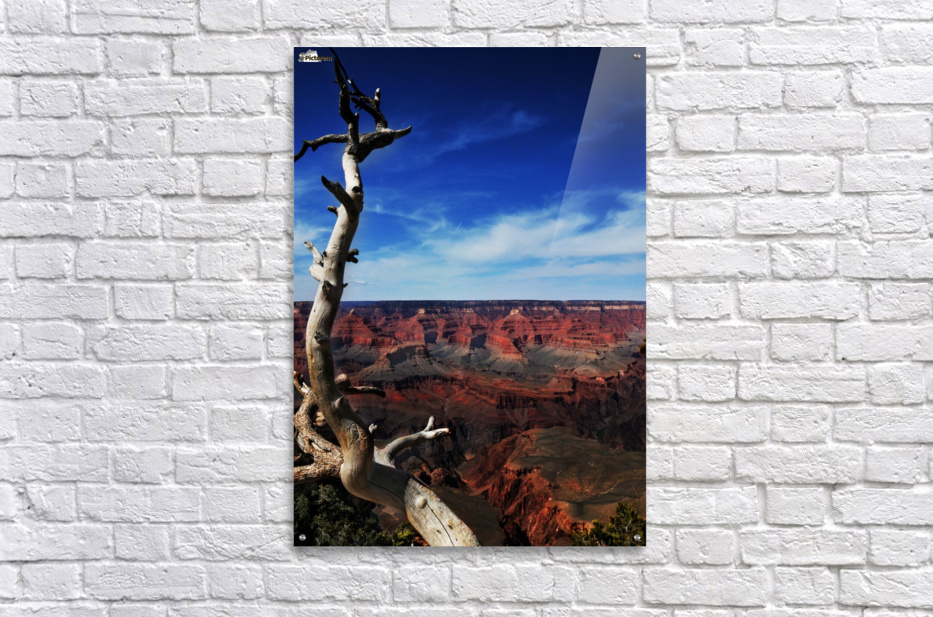 Grand Canyon framed by tree  Acrylic Print