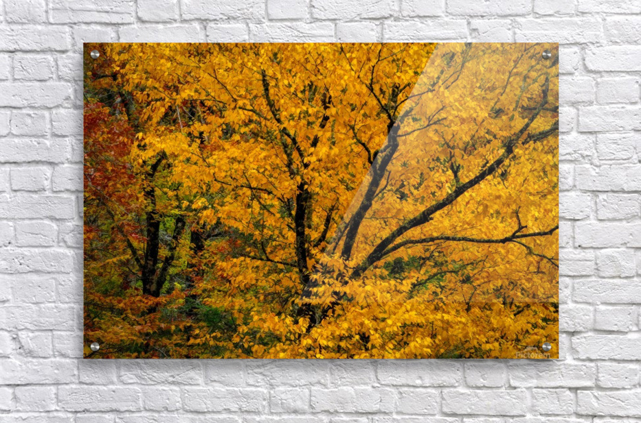 Yellow Tree Leaves  Acrylic Print