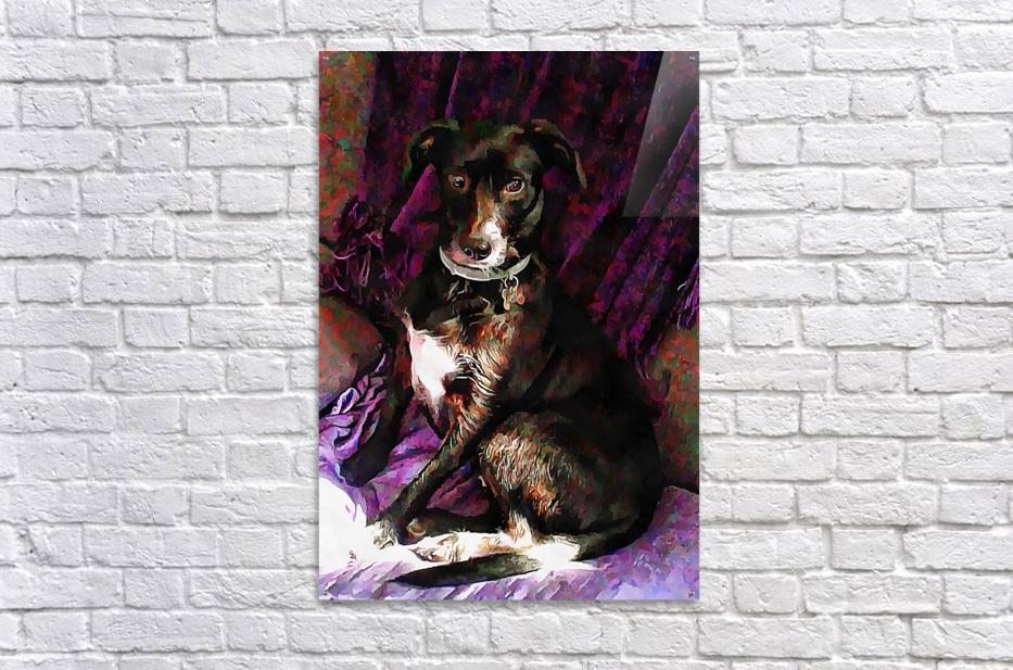 Purple Posing Puppy  Acrylic Print