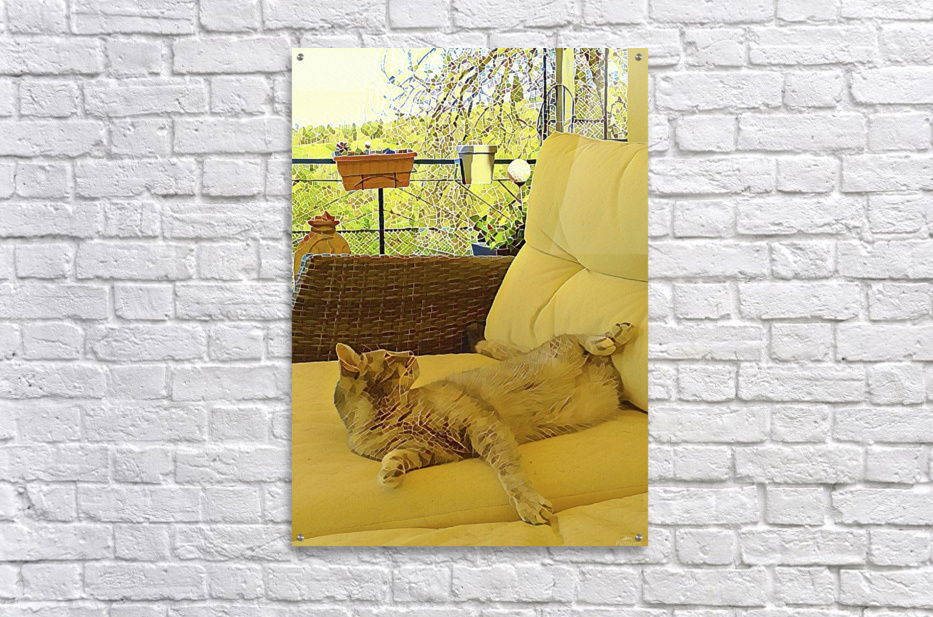 Lounging Around  Acrylic Print