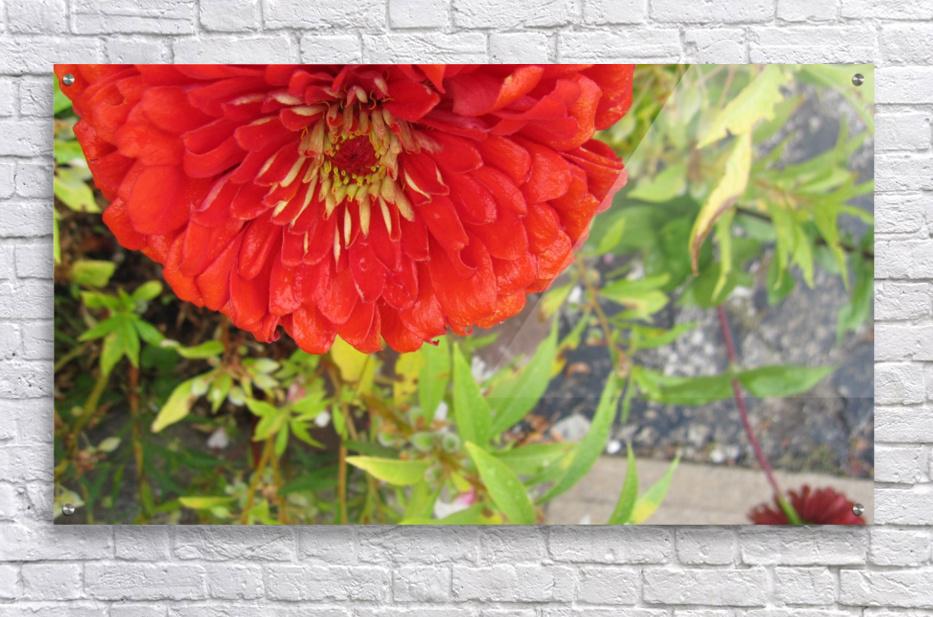 Flower (7)  Acrylic Print
