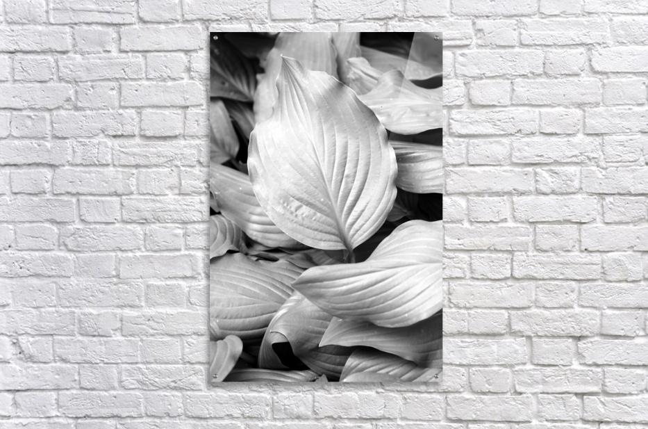Softly Curving Foliage BW 062618  Acrylic Print