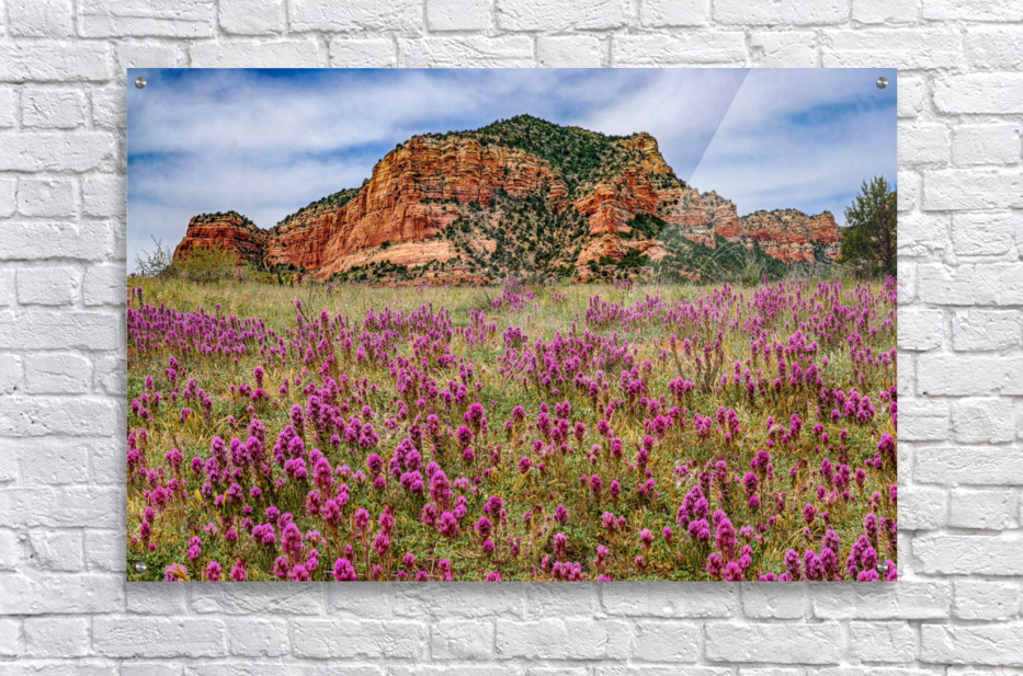 Clover Fields in Sedona  Acrylic Print