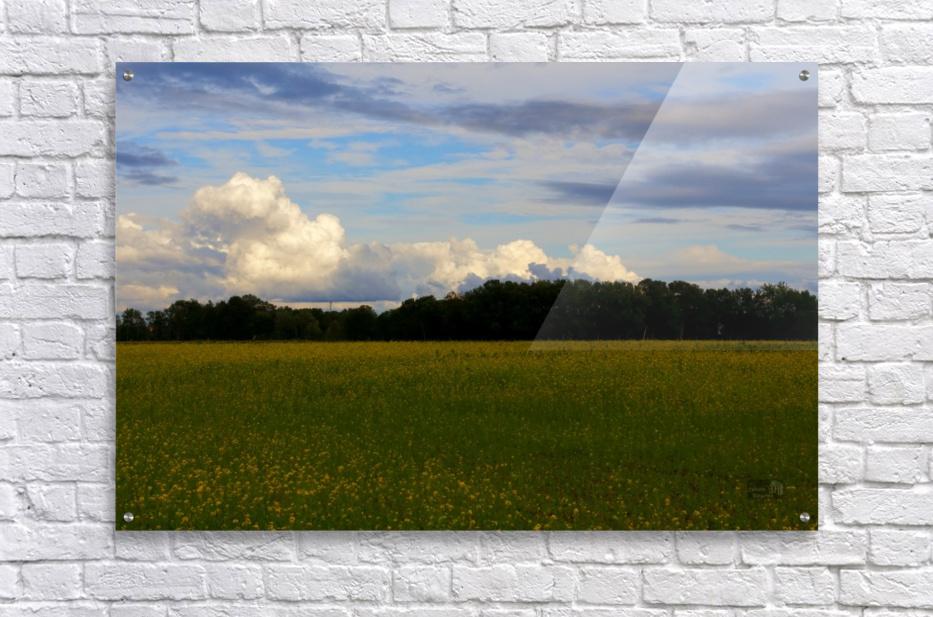 Champ ensoleille- Sunny field  Acrylic Print