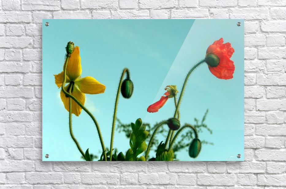 Spring Sky Flowers  Acrylic Print