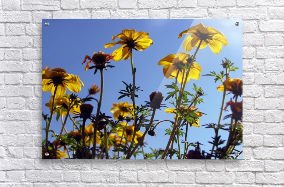 Summer Sky Flowers 1  Acrylic Print