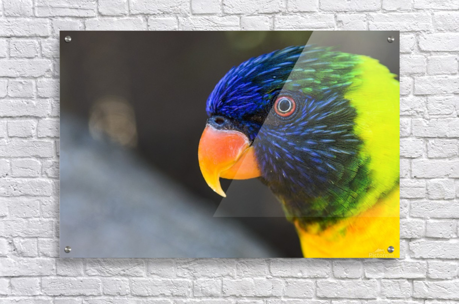 _LAB5536s  Acrylic Print