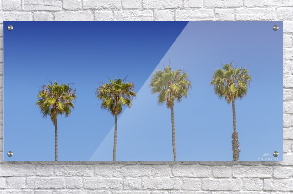 Lovely Palm Trees   Panorama  Acrylic Print