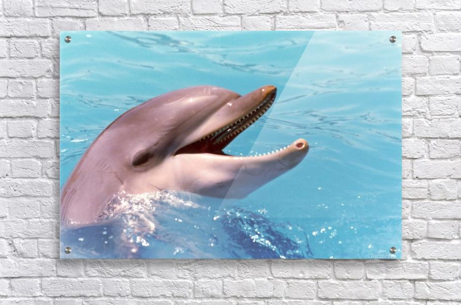 Happy Dolphin Photograph  Acrylic Print