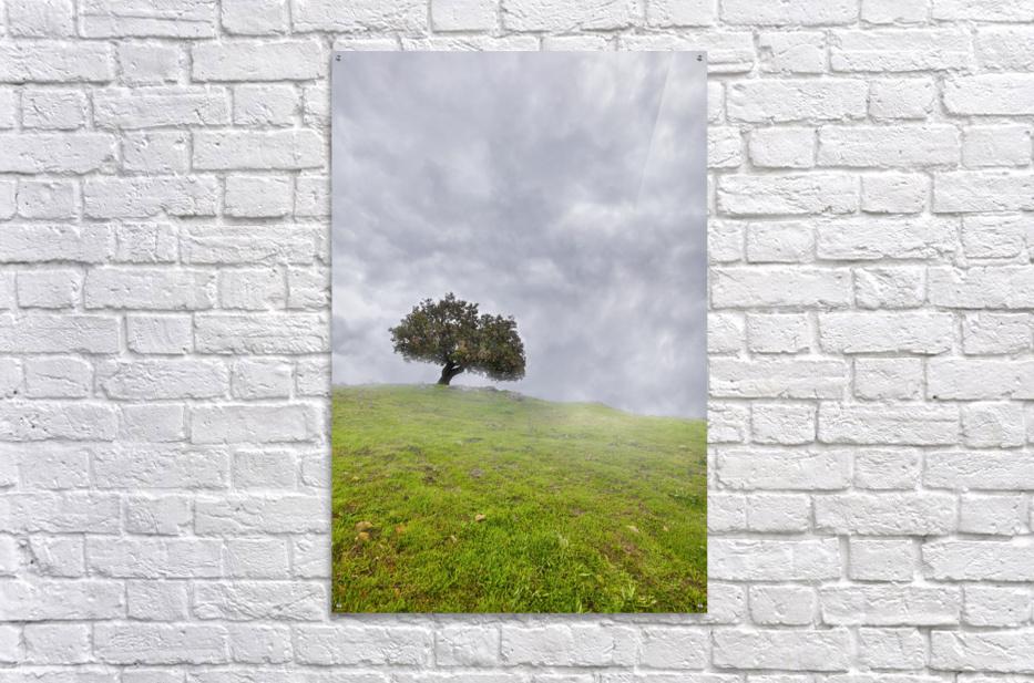 Enmeshed  Acrylic Print
