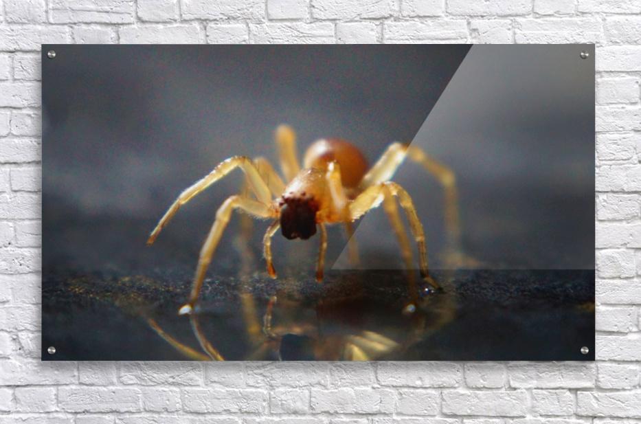 Best spider leg forward  Acrylic Print