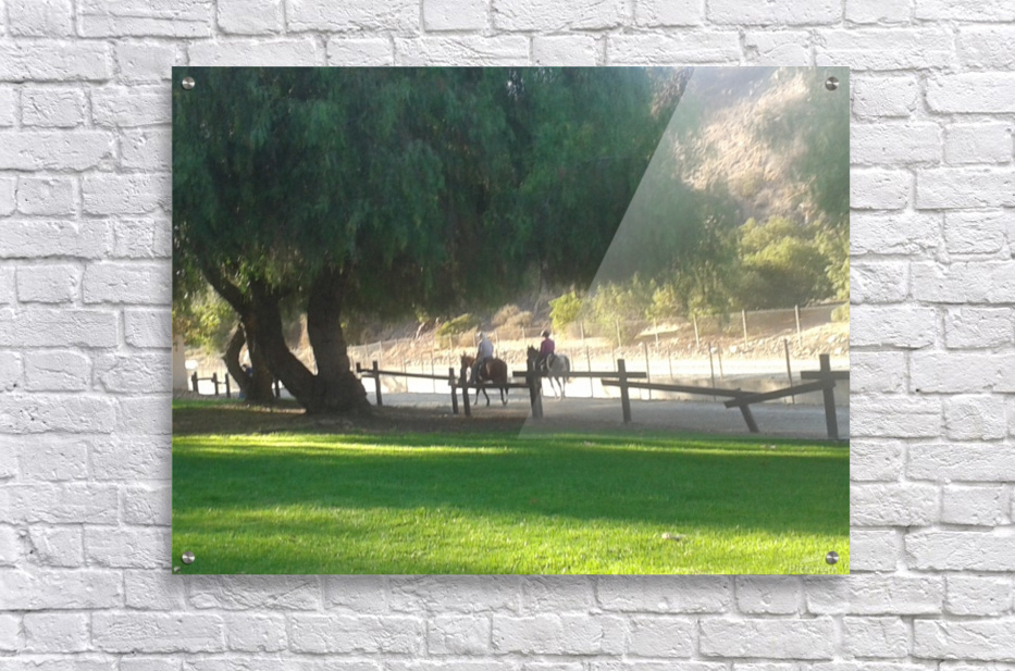 Horses at the park summertime   Acrylic Print