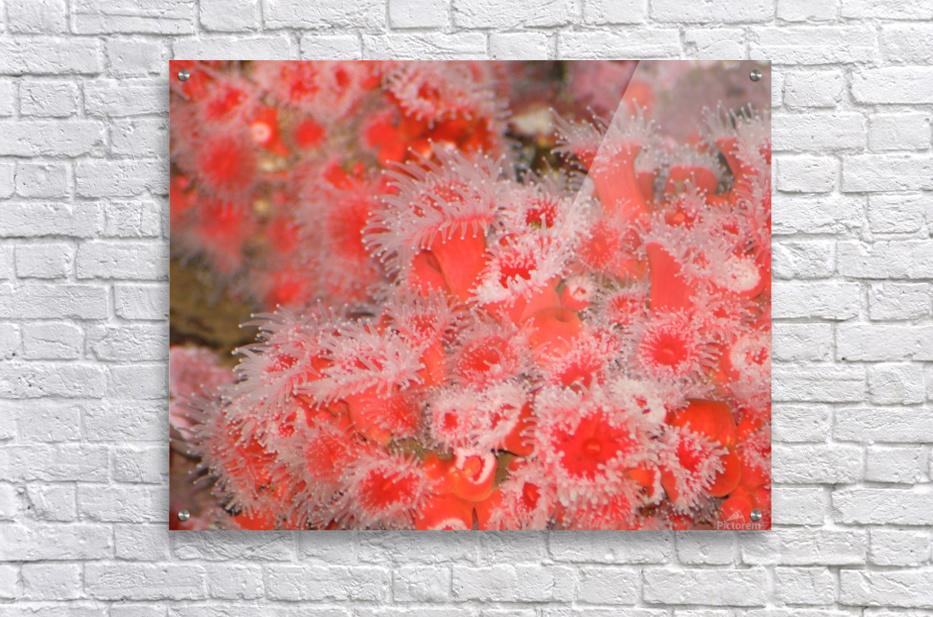 IMG_0613_1  Acrylic Print