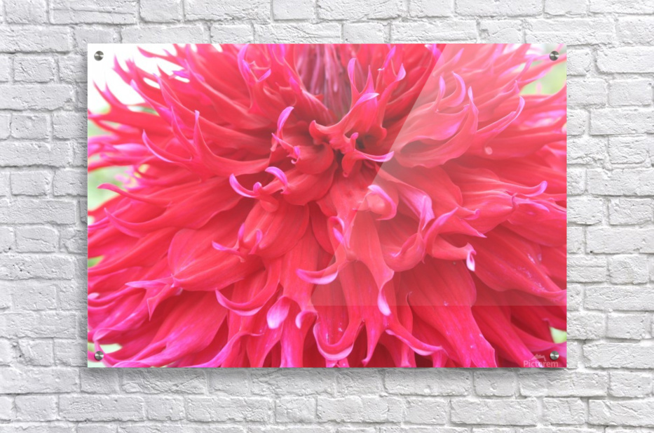 IMG_0710  Acrylic Print