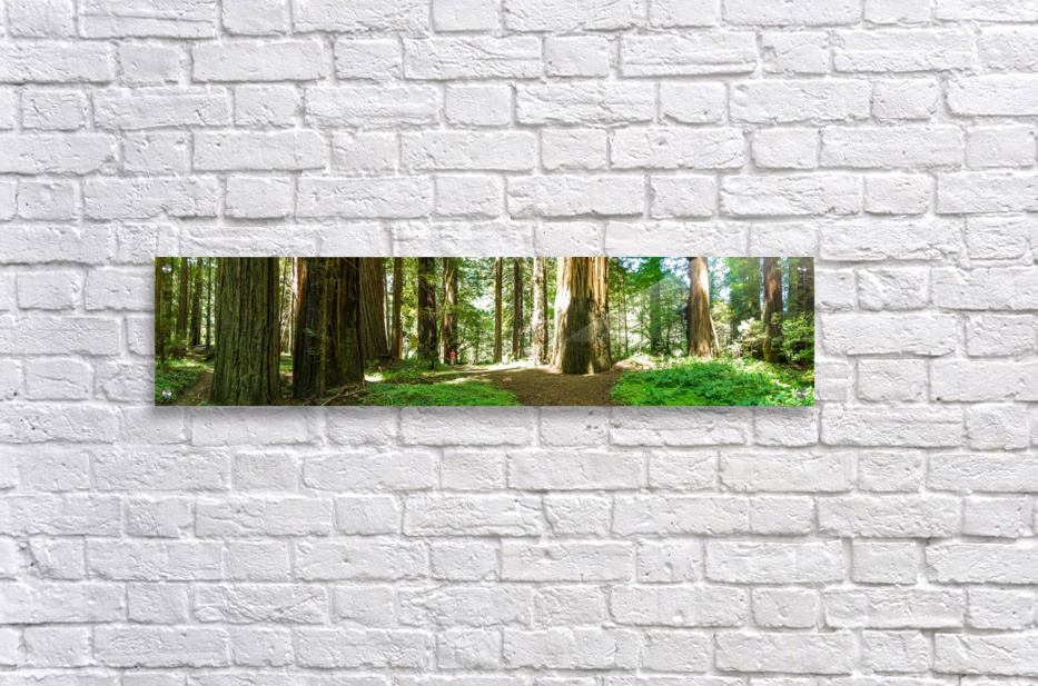 Redwood National Park  Acrylic Print