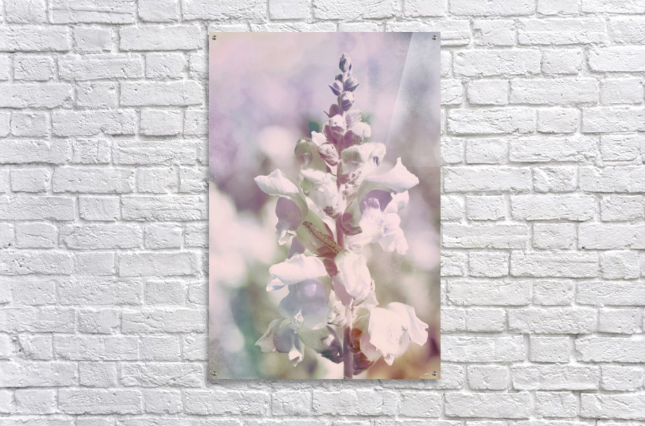 Soft Vintage Lupine  Acrylic Print