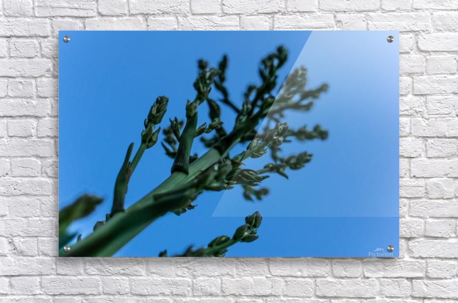 Yucca Skies  Acrylic Print