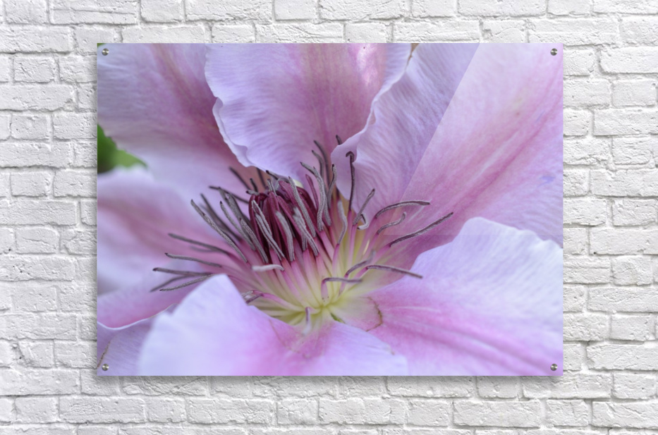 Pink Flower Photography  Acrylic Print