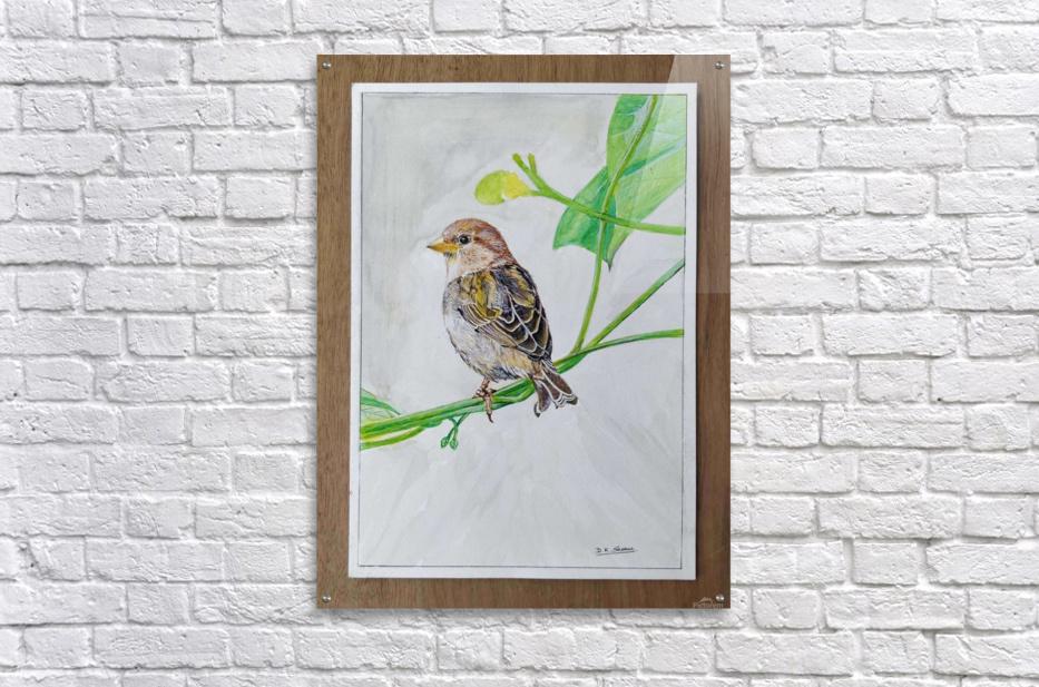 Sparrow_DKS  Acrylic Print