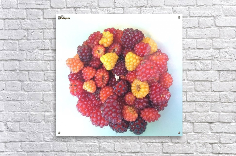 Wild Berries  Acrylic Print